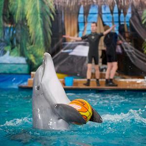 Дельфинарии, океанариумы Алнашей
