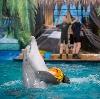 Дельфинарии, океанариумы в Алнашах